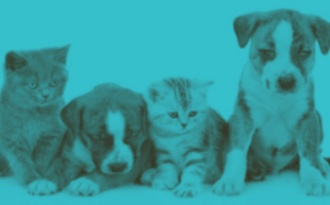 Image of puppies and kittens